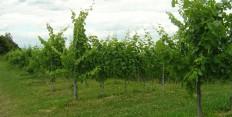 Weingarten/Vinothek