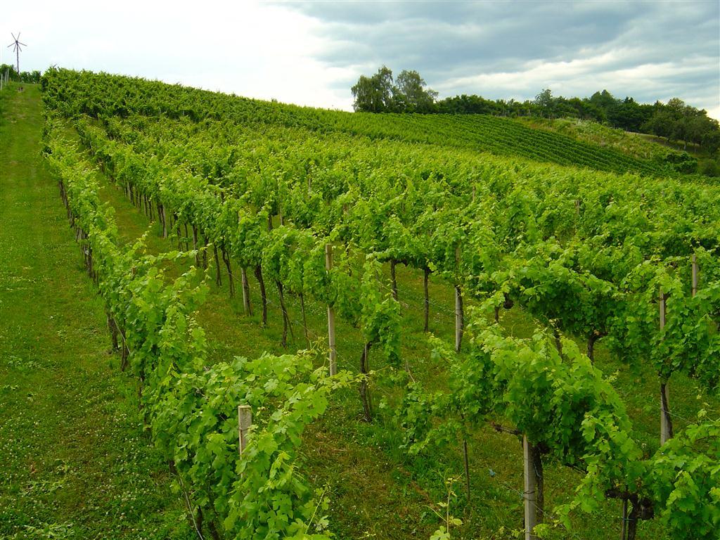 Weingarten Maurer (11)