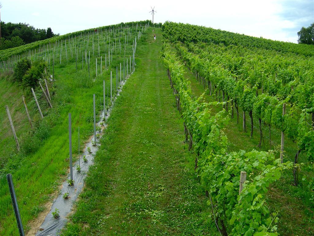 Weingarten Maurer (16)
