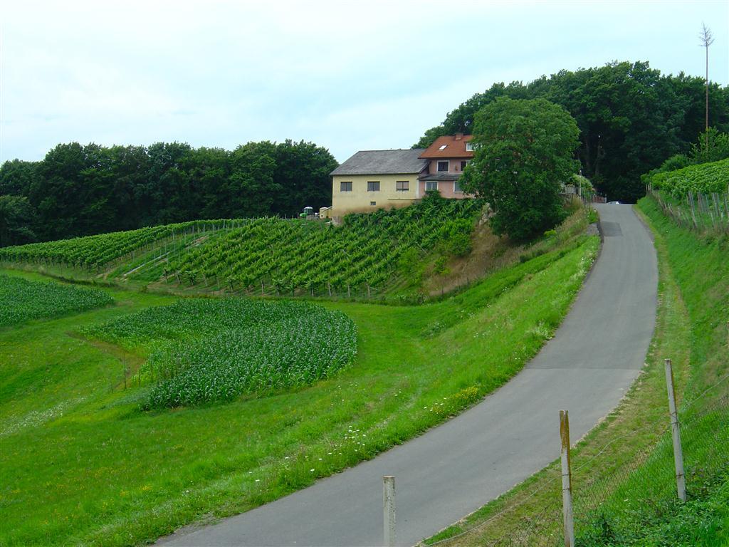 Weingarten Maurer (1)