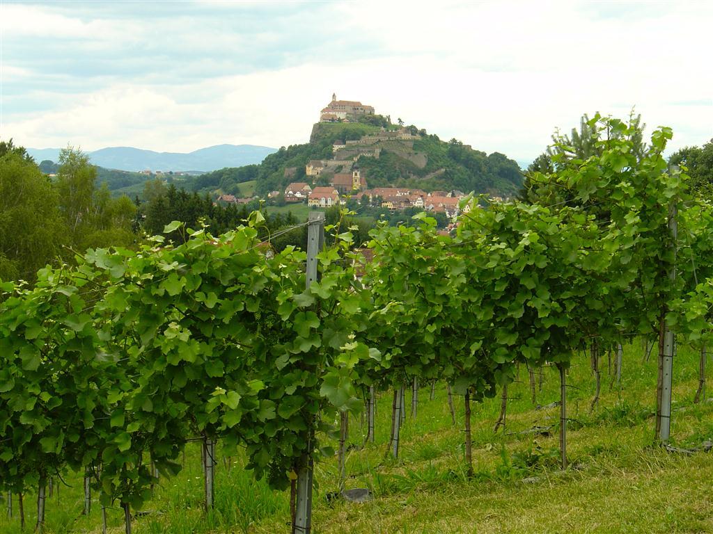 Weingarten Maurer (5)
